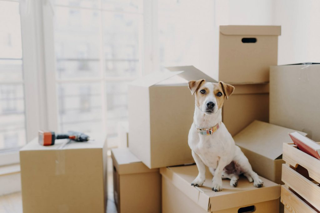 Emigrating to Germany with your pet? Here are our tips for making it easy